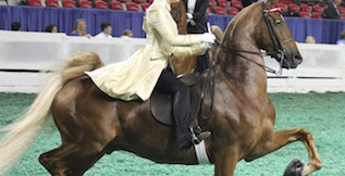 http://www.parkerandklein.com/wp-content/uploads/2016/06/horse4-show.jpg